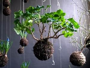 Kokedama Selber Machen : make moss balls to hang himself decoration with flowers and potted plants interior design ~ Orissabook.com Haus und Dekorationen