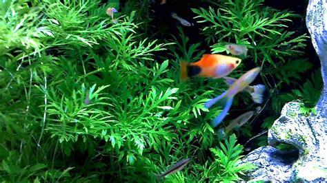 substrate for aquarium plants live plant aquarium substrate aquarium design ideas