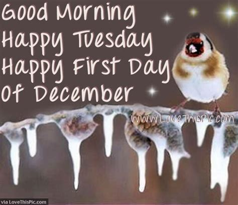 good morning happy tuesday happy  day  december
