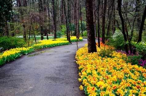 garvan woodland gardens path of tulips picture of garvan woodland gardens