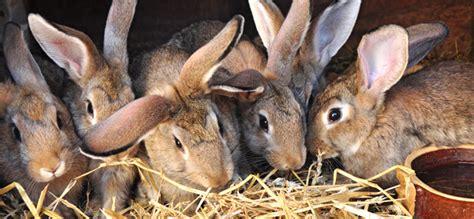 stall für kaninchen wie viel platz brauchen kaninchen