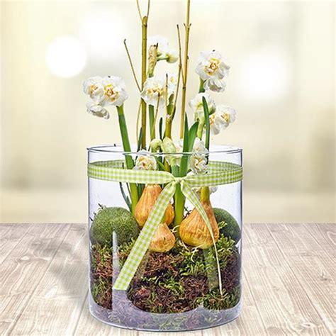 amaryllis im glas mit moos glas deko stilvoll und wundersch 246 n archzine net