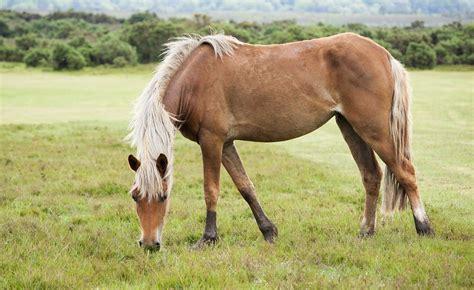 england forest myukdestination equine pony