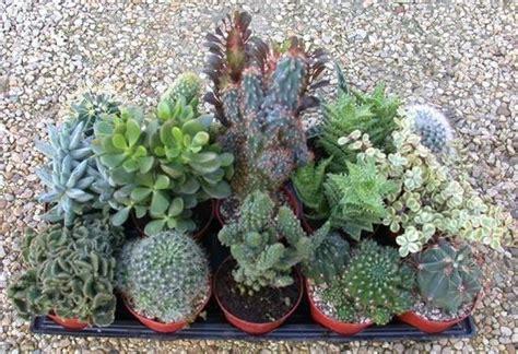 vasi per piante ricanti vasi per piante grasse vasi