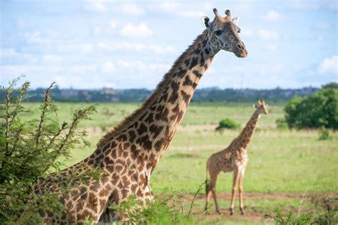 kenya travel guide    wanderlust demand africa