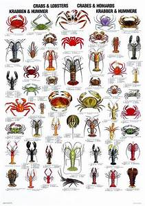 Crab And Lobster Poster  U2013 Coastal Nets Online Store