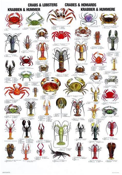 Crab and Lobster Poster ? Coastal Nets Online Store
