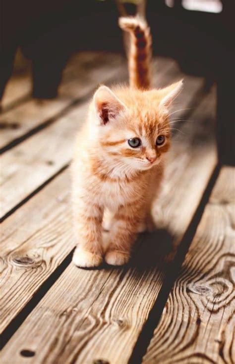 ist die katze ein passendes haustier fuer sie haustiere