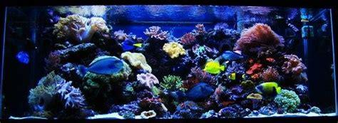Photo 1 210 Gallon Reef Aquarium Majestic Angel 7