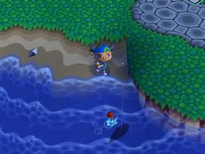 Coelacanth Animal Crossing Wiki Fandom Powered By Wikia