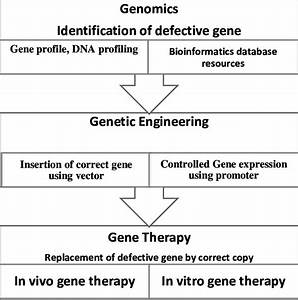 Flow Chart Illustrate The Role Of Genetic Engineering And