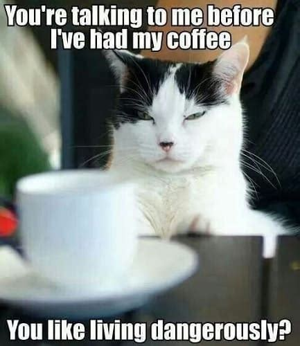 For all coffee addicts, we have a collection of funny. 30 I Need Coffee Memes for All Coffee Lovers - SheIdeas