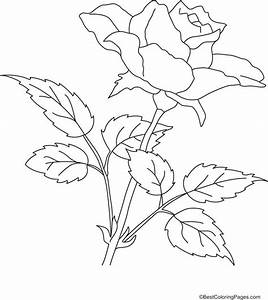 Realistic Rose Coloring Pages Coloring Pages