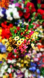 Flower wallpapers HD Android Wallpaper for Mobile