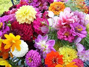 beautiful flower garden weneedfun