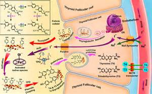Biosynthesis of...