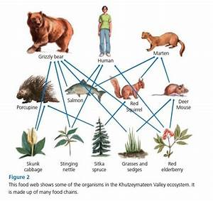 Are humans at the top of the food chain? - Quora
