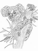 Koala Coloring Adult Mandala Printable Kleurplaten Dieren Zentangle Animal Coloriage Kleurplaat Animals Geometric Malvorlagen Colouring Adults Bear Koalas Erwachsene Ausmalbilder sketch template