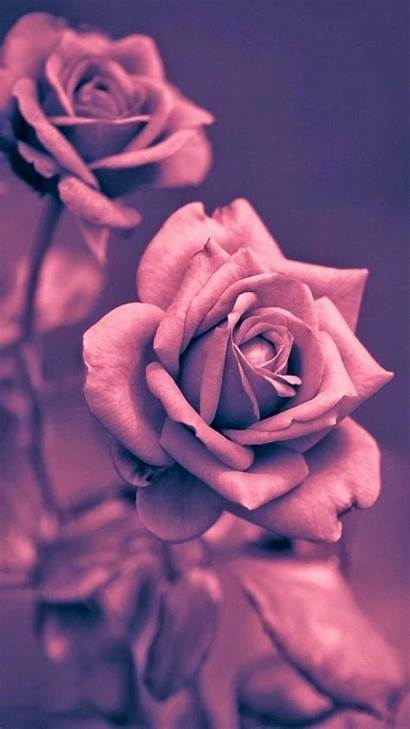 Rose Gold Background Wallpapers Iphone Pc 1920a