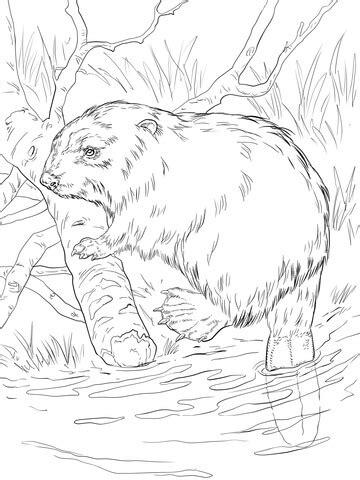 eurasian beaver   river bank coloring page supercoloringcom