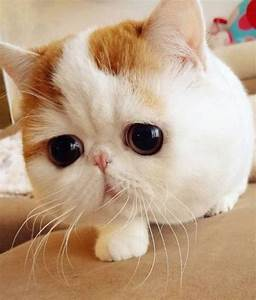 cats cute cats snoopy the cat cats with big eyes ...