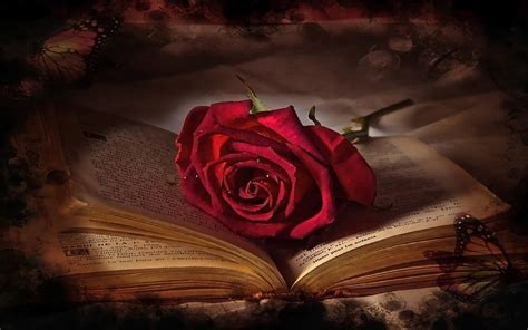 book red rose  wallpaperscom