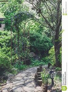 Kleinwüchsige Immergrüne Hecke : elegant immergr ne b sche einzigartige ideen zum sichtschutz ~ Lizthompson.info Haus und Dekorationen