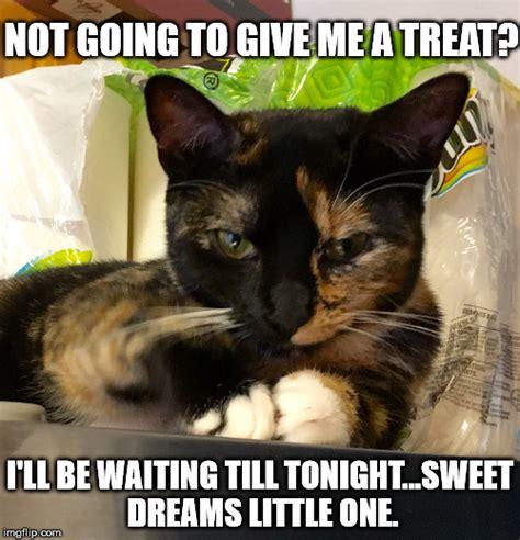 Evil Cat Meme - evil cat meme imgflip