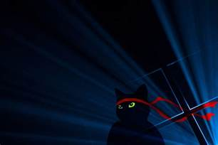 windows cat microsoft celebrates windows 10 anniversary update with