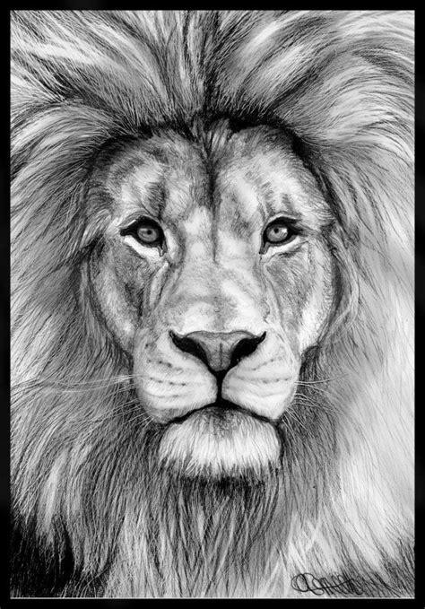 lion head drawing | Summer Refs 2013 | Pinterest
