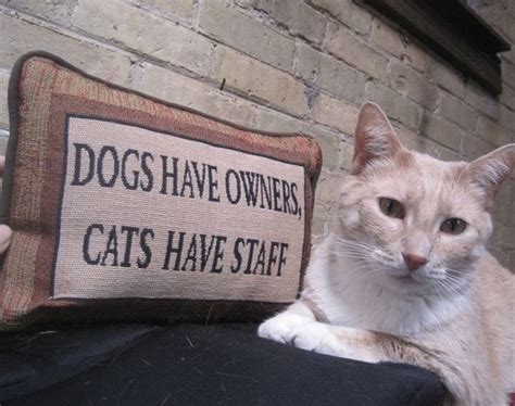 Image result for cats have staff