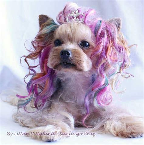 pin von sveta auf kreativ groom peluqueria de perros