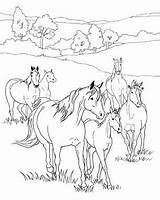 Coloring Horse Pages Horses Wild Printable Herd Breyer Farm Sheets Activities Books Word Breyerhorses Field Adults Colouring Drawings Website Getdrawings sketch template