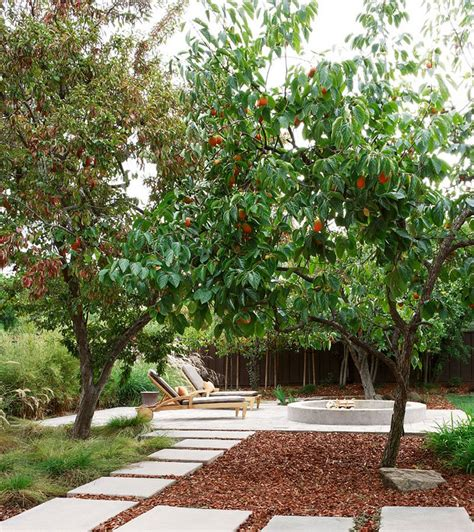 Best Backyard Fruit Trees - 22 tree shade landscaping ideas for your yards home