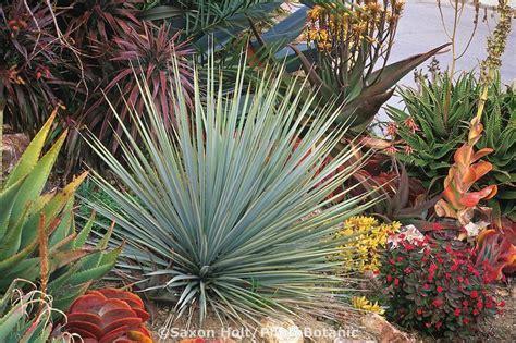 southern california succulents 78 images about drought tolerant rock garden plants on pinterest gardens sun and succulent