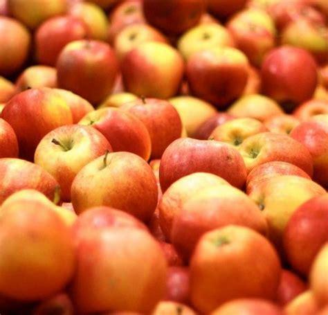 quels sont les meilleurs cuisinistes quels sont les meilleurs fruits pour les diabétiques
