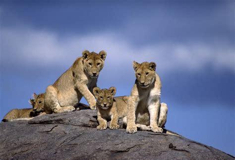 intimate  week safari serengeti katavi mahale