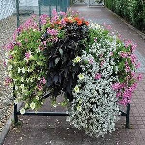 Fleur D Hiver Pour Jardinière : jardini re pour barri re de ville bac fleur pour ~ Dailycaller-alerts.com Idées de Décoration