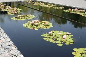 Free Images   Landscape  Nature  Outdoor  Blossom  Plant  Leaf  Flower  Bloom  Lake  Summer
