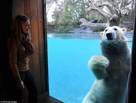 zoo lodge jamala wildlife canberra un polar fleche taiko hotel glass france experience bears enclosure stanze diventano ambiente solo appearances