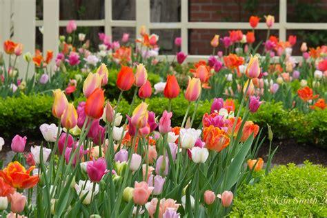 eleletsitz tulip garden images eleletsitz tulip garden design images