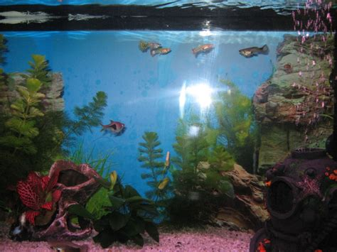 aquarium 10 litre trouvez le meilleur prix sur voir