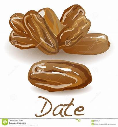 Fruit Date Vector Illustration Dry Isolated Dreamstime