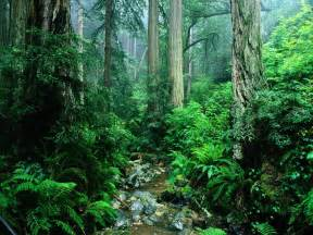 Green Amazon Forest 1600x1200 Wallpapers,Amazon Forest 1600x1200 ...