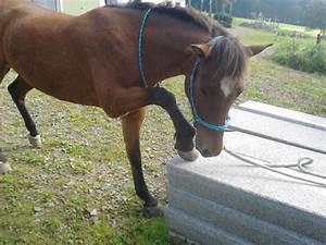 Podest Pferd Selber Bauen : natura horsemanchip mit gina gina horsemanchip ~ Yasmunasinghe.com Haus und Dekorationen
