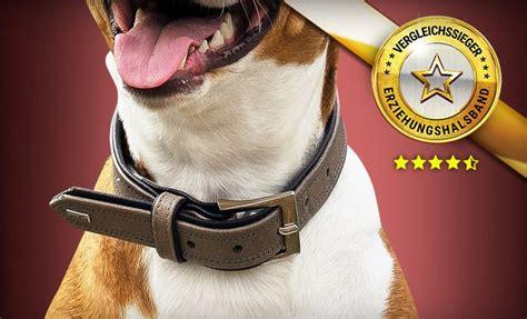 erziehungshalsband hunde empfehlungen fuer