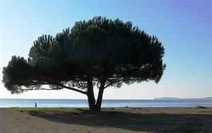 Abattage D Arbres Autorisation : mougins l 39 abattage d 39 arbres est soumis autorisation ~ Premium-room.com Idées de Décoration