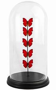 Globe En Verre : papillons rouges cymothoe sangaris pr sent s sous globe en verre ~ Teatrodelosmanantiales.com Idées de Décoration