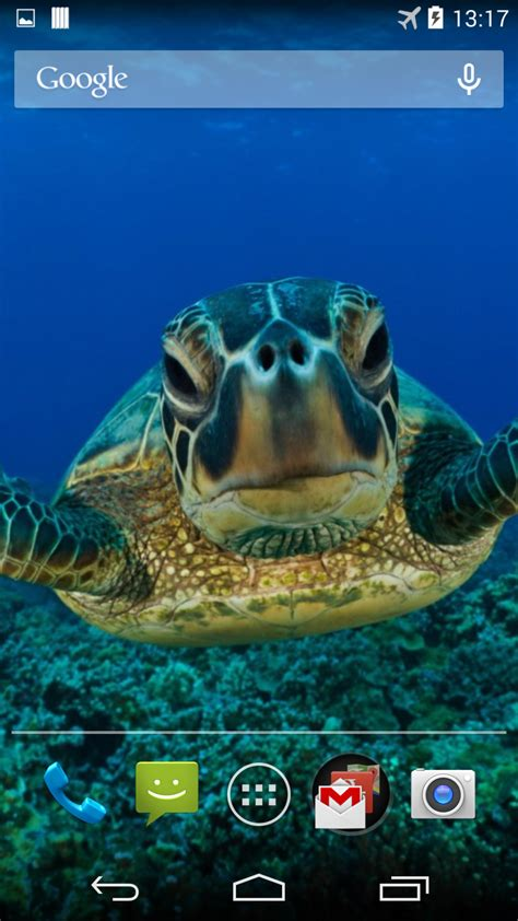 Sea Turtle Live Wallpaper Appstore For Android