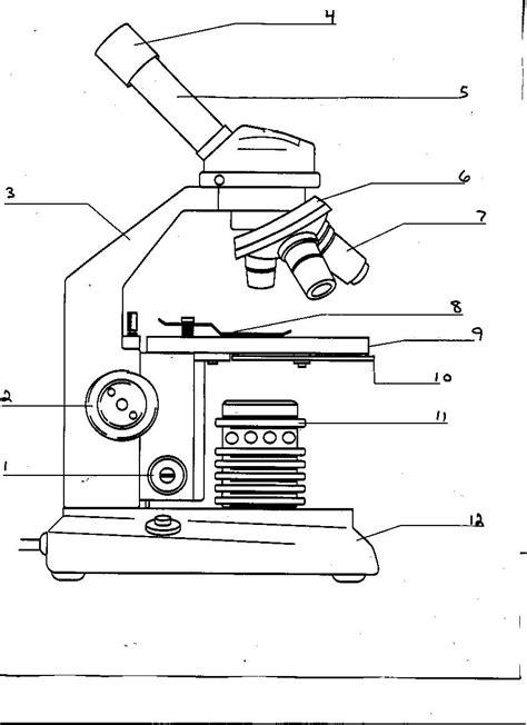 Microscope Quiz Quizlet Worksheet Microscope Labeling Worksheet Grass Fedjp